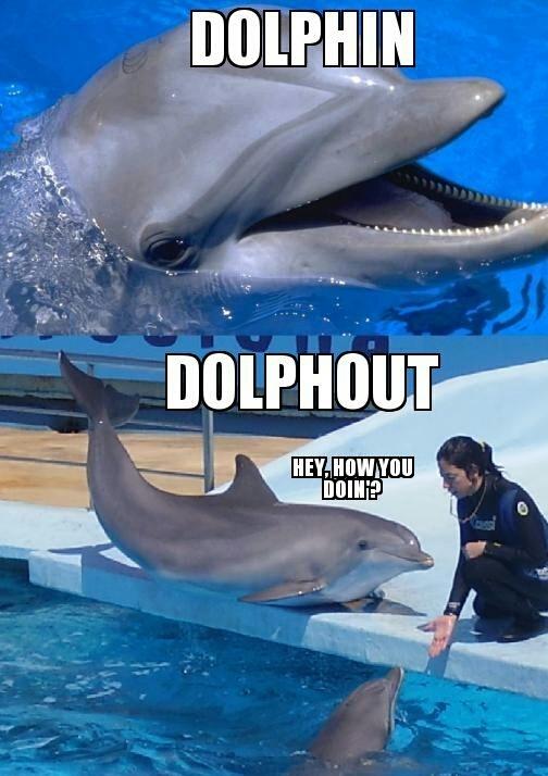 dolphin bites tourist
